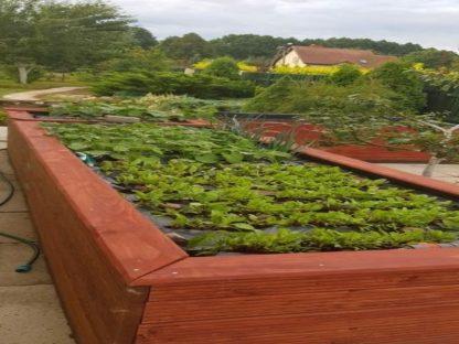 Hochbeet mit Jungpflanzen, groß, 400 cm